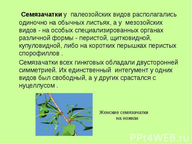 Семязачатки у палеозойских видов располагались одиночно на обычных листьях, а у мезозойских видов - на особых специализированных органах различной формы - перистой, щитковидной, купуловидной, либо на коротких перышках перистых спорофиллов . Семязача…
