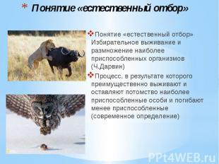 Понятие «естественный отбор» Понятие «естественный отбор» Избирательное выживани