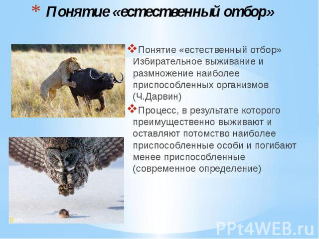 Понятие «естественный отбор» Понятие «естественный отбор» Избирательное выживание и размножение наиболее приспособленных организмов (Ч.Дарвин) Процесс, в результате которого преимущественно выживают и оставляют потомство наиболее приспособленные осо…