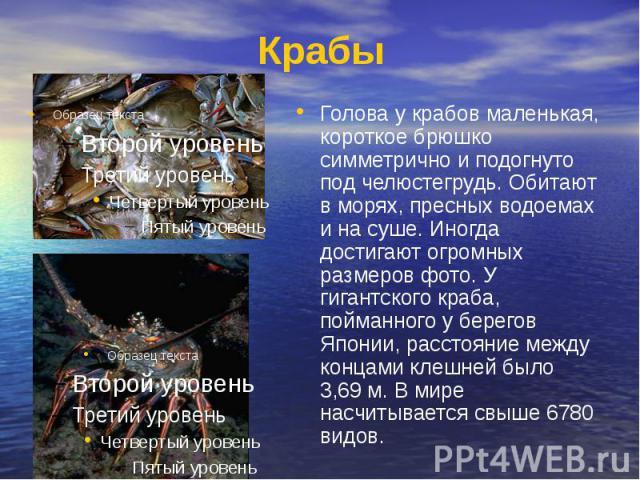 Крабы Голова у крабов маленькая, короткое брюшко симметрично и подогнуто под челюстегрудь. Обитают в морях, пресных водоемах и на суше. Иногда достигают огромных размеров фото. У гигантского краба, пойманного у берегов Японии, расстояние между конца…