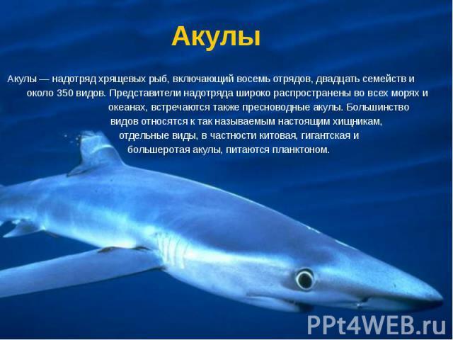 Акулы Акулы — надотряд хрящевых рыб, включающий восемь отрядов, двадцать семейств и около 350 видов. Представители надотряда широко распространены во всех морях и океанах, встречаются также пресноводные акулы. Большинство видов относятся к так назыв…