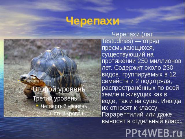 Черепахи Черепахи (лат. Testudines) — отряд пресмыкающихся, существующий на протяжении 250 миллионов лет. Содержит около 230 видов, группируемых в 12 семейств и 2 подотряда, распространённых по всей земле и живущих как в воде, так и на суше. Иногда …