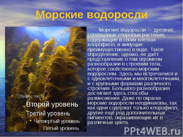 Морские водоросли Морские водоросли — древние, слоевцовые споровые растения, содержащие в своих клетках хлорофилл, и живущие преимущественно в воде. Такое определение, однако, не даёт представление о том огромном разнообразии в строении тела, которо…