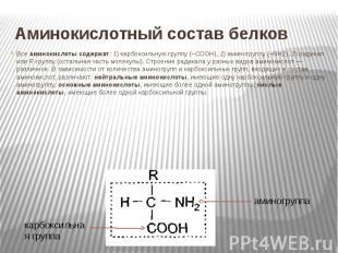 Аминокислотный состав белков Все аминокислоты содержат: 1) карбоксильную группу