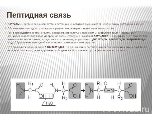 Пептидная связь Пептиды — органические вещества, состоящие из остатков аминокислот, соединенных пептидной связью. Образование пептидов происходит в результате реакции конденсации аминокислот. При взаимодействии аминогруппы одной аминокислоты с карбо…