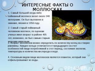 1. Самый большой когда-либо пойманный моллюск весил около 340 килограмм. Он был