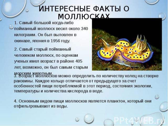 1. Самый большой когда-либо пойманный моллюск весил около 340 килограмм. Он был выловлен в окинаве, япония в 1956 году. 1. Самый большой когда-либо пойманный моллюск весил около 340 килограмм. Он был выловлен в окинаве, япония в 1956 году. 2. Самый …