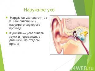 Наружное ухо состоит из ушной раковины и наружного слухового прохода. Наружное у