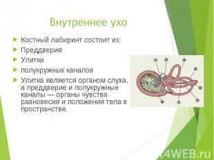 Костный лабиринт состоит из: Костный лабиринт состоит из: Преддверия Улитки полу