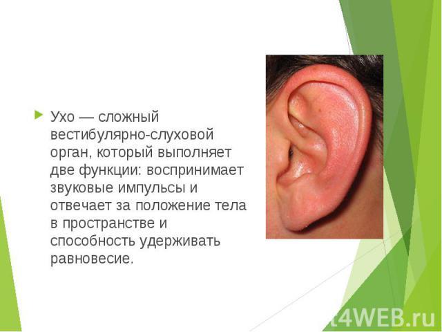 Ухо — сложный вестибулярно-слуховой орган, который выполняет две функции: воспринимает звуковые импульсы и отвечает за положение тела в пространстве и способность удерживать равновесие. Ухо — сложный вестибулярно-слуховой орган, который выполняет дв…