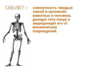 совокупность твердых тканей в организме животных и человека, дающих телу опору и