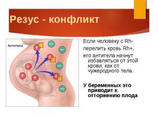 Если человеку с Rh- Если человеку с Rh- перелить кровь Rh+, его антитела начнут