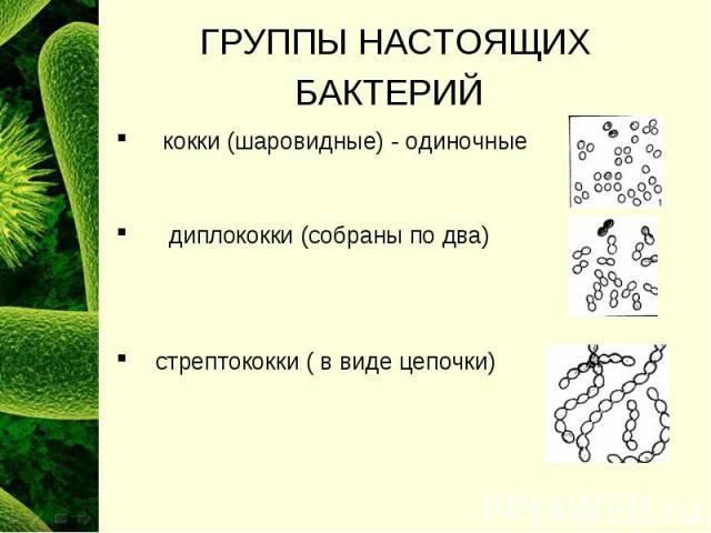 Сколько видов бактерий существует
