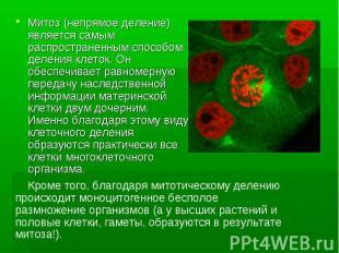 Митоз (непрямое деление) является самым распространенным способом деления клеток