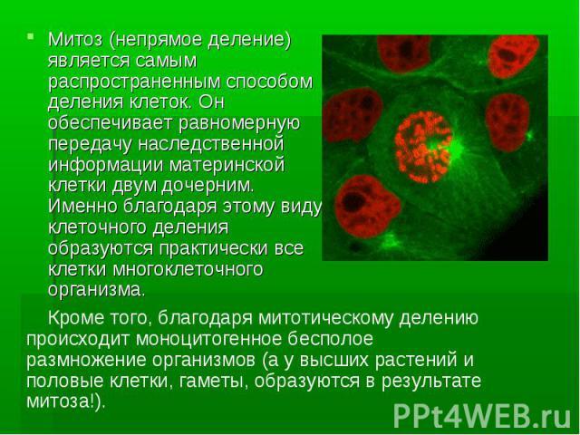 Митоз (непрямое деление) является самым распространенным способом деления клеток. Он обеспечивает равномерную передачу наследственной информации материнской клетки двум дочерним. Именно благодаря этому виду клеточного деления образуются практически …