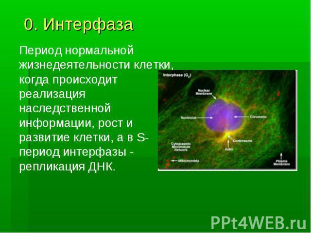 0. Интерфаза