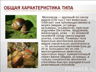 Моллюски — крупный по числу видов (130 тыс.) тип животных. Обитают они преимущес