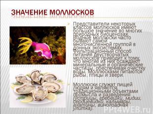 Представители некоторых классов моллюсков имеют большое значение во многих приро