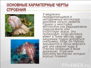 У медленно передвигающихся и неподвижных моллюсков раковина сильно развита. Одна