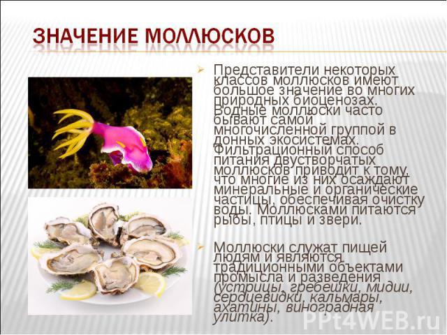 Представители некоторых классов моллюсков имеют большое значение во многих природных биоценозах. Водные моллюски часто бывают самой многочисленной группой в донных экосистемах. Фильтрационный способ питания двустворчатых моллюсков приводит к тому, ч…