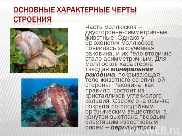 Часть моллюсков – двусторонне-симметричные животные. Однако у брюхоногих моллюсков появилась закрученная раковина, и их тело вторично стало асимметричным. Для моллюсков характерна твердая минеральная раковина, покрывающая тело животного со спинной с…