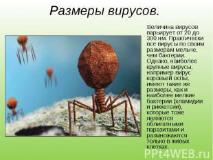 Величина вирусов варьирует от 20 до 300 нм. Практически все вирусы по своим разм