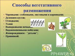 Черенками: стеблевыми, листовыми и корневыми; Черенками: стеблевыми, листовыми и