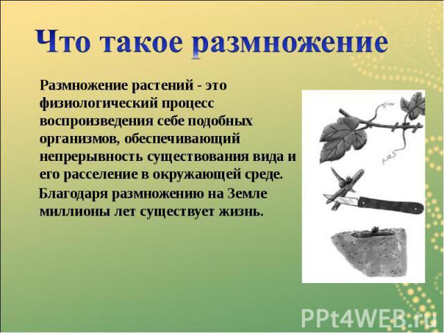 Размножение растений - это физиологический процесс воспроизведения себе подобных организмов, обеспечивающий непрерывность существования вида и его расселение в окружающей среде. Размножение растений - это физиологический процесс воспроизведения себе…