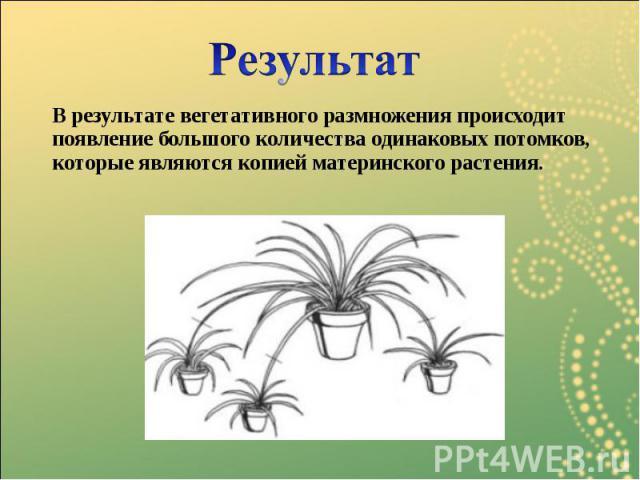 В результате вегетативного размножения происходит появление большого количества одинаковых потомков, которые являются копией материнского растения. В результате вегетативного размножения происходит появление большого количества одинаковых потомков, …