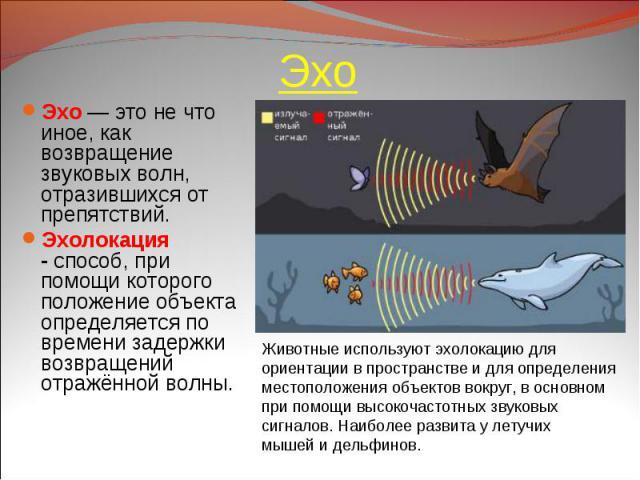 Эхо — это не что иное, как возвращение звуковых волн, отразившихся от препятствий. Эхо — это не что иное, как возвращение звуковых волн, отразившихся от препятствий. Эхолокация -способ, при помощи которого положение объекта определяется по вре…