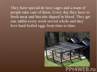They have special de luxe cages and a team of people take care of them. Every da