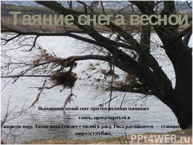 Выпавший зимой снег при потеплении начинает Выпавший зимой снег при потеплении начинает таять, превращаться в жидкую воду. Талая вода стекает с полей в реку. Река разливается— становится шире и глубже.