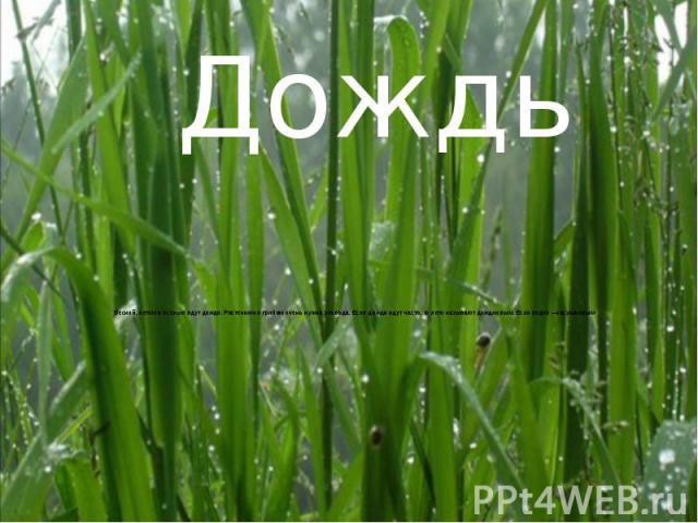 Весной, летом и осенью идут дожди. Растениям и грибам очень нужна эта вода. Если дожди идут часто, то лето называют дождливым. Если редко—засушливым Весной, летом и осенью идут дожди. Растениям и грибам очень нужна эта вода. Если дожди идут ча…