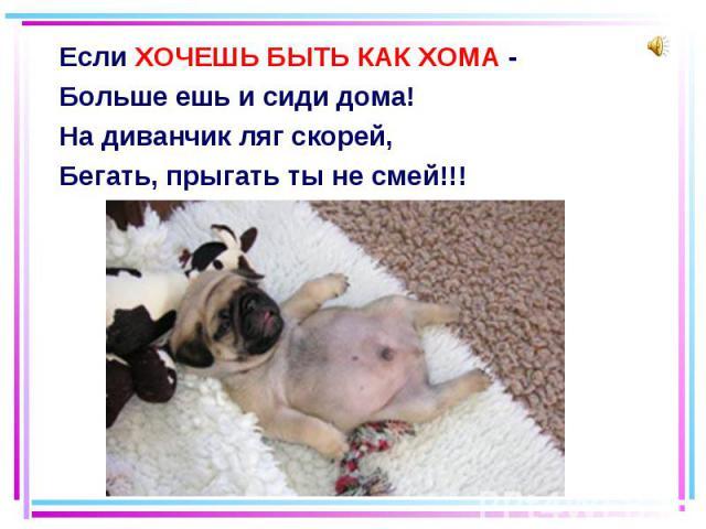 Если ХОЧЕШЬ БЫТЬ КАК ХОМА - Если ХОЧЕШЬ БЫТЬ КАК ХОМА - Больше ешь и сиди дома! На диванчик ляг скорей, Бегать, прыгать ты не смей!!!