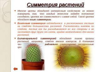 Многие цветы обладают интересным свойством: их можно повернуть так, что каждый л