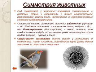 Под симметрией у животных понимают соответствие в размерах, форме и очертаниях,