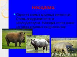 Носороги. Одно из самых крупных животных. Очень раздражителен и непредсказуем. Н