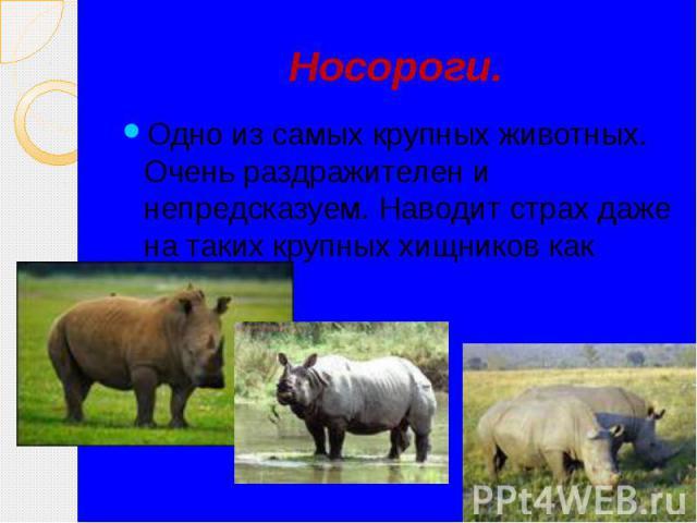 Носороги. Одно из самых крупных животных. Очень раздражителен и непредсказуем. Наводит страх даже на таких крупных хищников как львы.