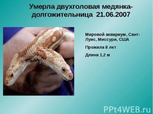 Умерла двухголовая медянка-долгожительница 21.06.2007