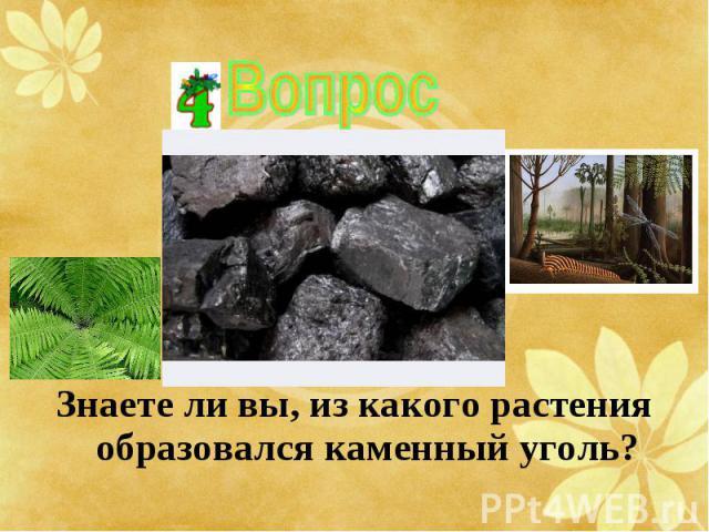 Знаете ли вы, из какого растения образовался каменный уголь? Знаете ли вы, из какого растения образовался каменный уголь?