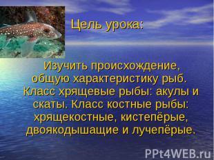 Изучить происхождение, общую характеристику рыб. Класс хрящевые рыбы: акулы и ск