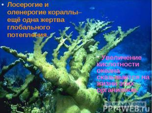 Лосерогие и оленерогие кораллы– ещё одна жертва глобального потепления. Лосероги