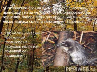 Так же хищнический, незаконный промысел на выхухоль является причиной ее вымиран