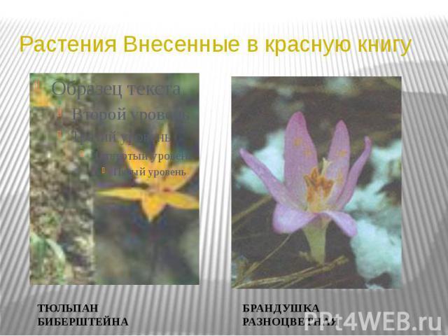 Растения Внесенные в красную книгу