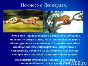 Немного о Леопардах. Хотя это - только третий самый большой кот в мире после тиг