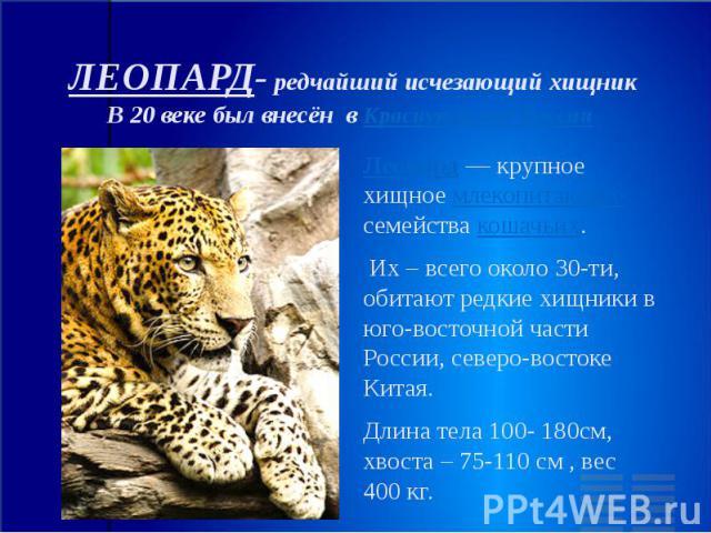 ЛЕОПАРД- редчайший исчезающий хищник В 20 веке был внесён в Красную книгу России Леопард — крупное хищное млекопитающее семейства кошачьих. Их – всего около 30-ти, обитают редкие хищники в юго-восточной части России, северо-востоке Китая. Длина тела…