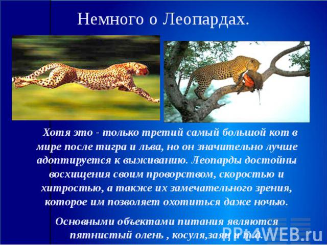 Немного о Леопардах. Хотя это - только третий самый большой кот в мире после тигра и льва, но он значительно лучше адоптируется к выживанию. Леопарды достойны восхищения своим проворством, скоростью и хитростью, а также их замечательного зрения, кот…