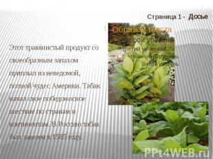 Страница 1 - Досье Этот травянистый продукт со своеобразным запахом приплыл из н