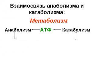 Анаболизм Катаболизм