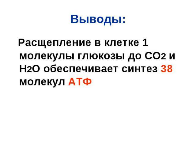 Расщепление в клетке 1 молекулы глюкозы до СО2 и Н2О обеспечивает синтез 38 молекул АТФ Расщепление в клетке 1 молекулы глюкозы до СО2 и Н2О обеспечивает синтез 38 молекул АТФ